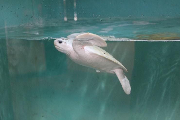 Como é o  Oceanário de Aracaju? Saiba um pouco sobre ele aqui…