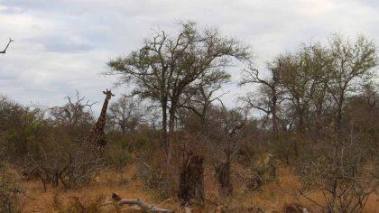 girafa-em-klaserie-como-foi-fazer-um-safari-na-africa-do-sul