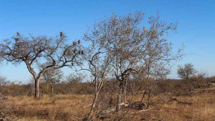 passaros-em-klaserie-como-foi-fazer-um-safari-na-africa-do-sul