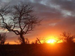 por-do-sol-safari-africa-do-sul