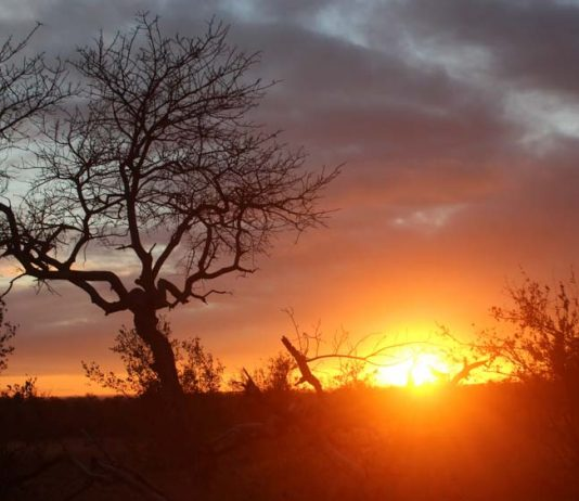 por-do-sol-safari-africa-do-sul