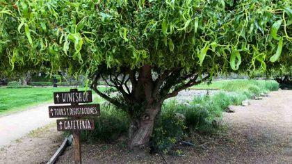 vinícola emiliana